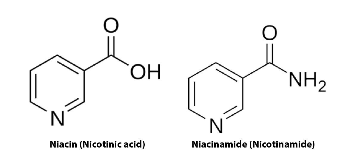 Vitamin B Derivative Nicotinamide Appears To Reduce Skin Cancer Risk