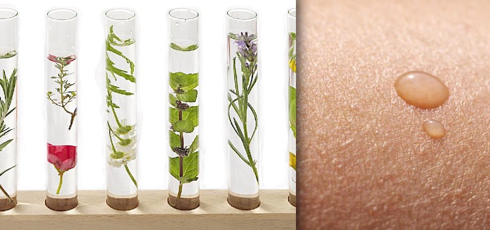 Herbal Anti-Inflammatory Agents for Skin Disease